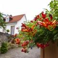 ...im Garten